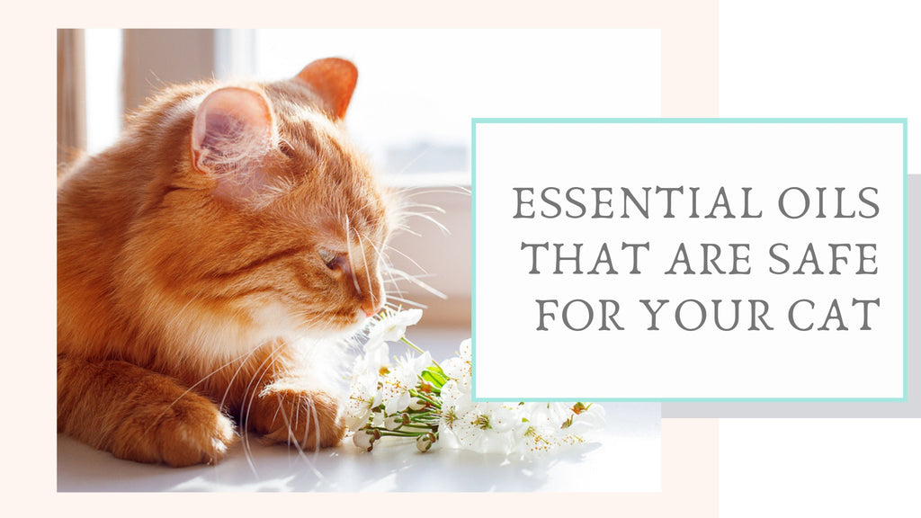 ViviPet | Essential Oils that are Safe for Your Cat
