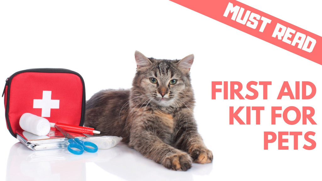 ViviPet | The Best Emergency Items for Your Pet