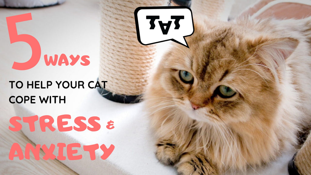ViviPet | 5 Way to Help Your Cat Cope with Stress and Anxiety