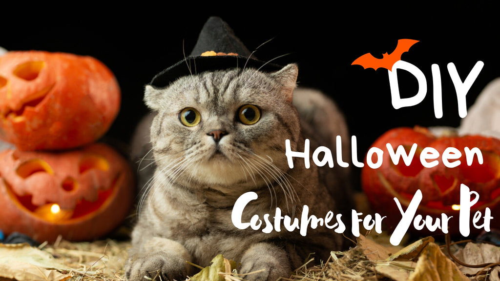 ViviPet | 3 DIY Halloween Costumes for Your Pet