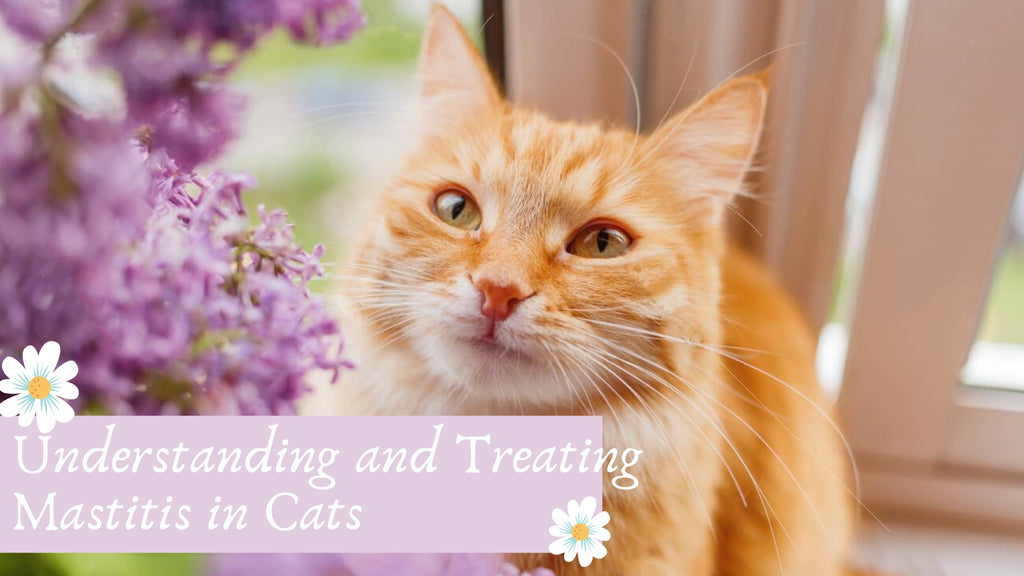 ViviPet | Understanding and Treating Mastitis in Cats