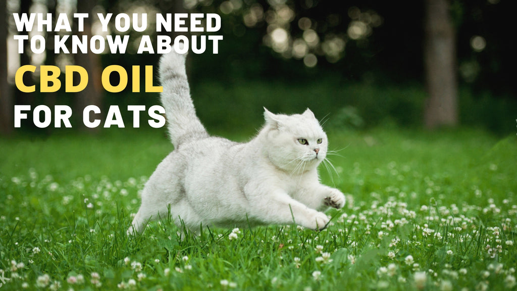 ViviPet | What You Need to Know About CBD Oil for Cats