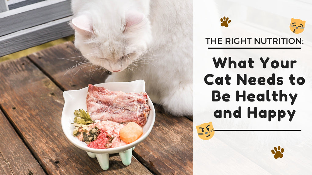 ViviPet | The Right Nutrition: What Your Cat Needs to Be Healthy and Happy