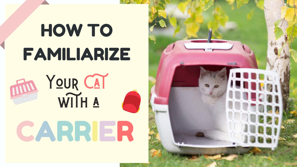 ViviPet | How to Familiarize Your Cat with a Carrier