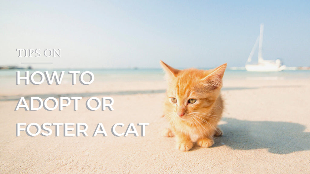 ViviPet | Tips on How to Adopt or Foster a Cat