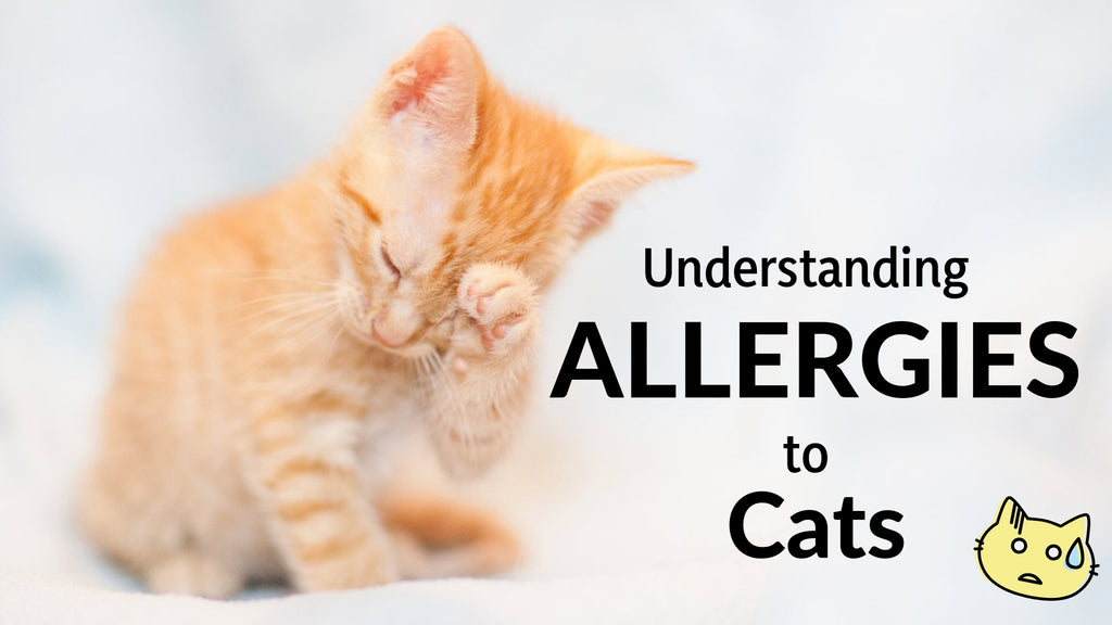 ViviPet | Understanding Allergies to Cats