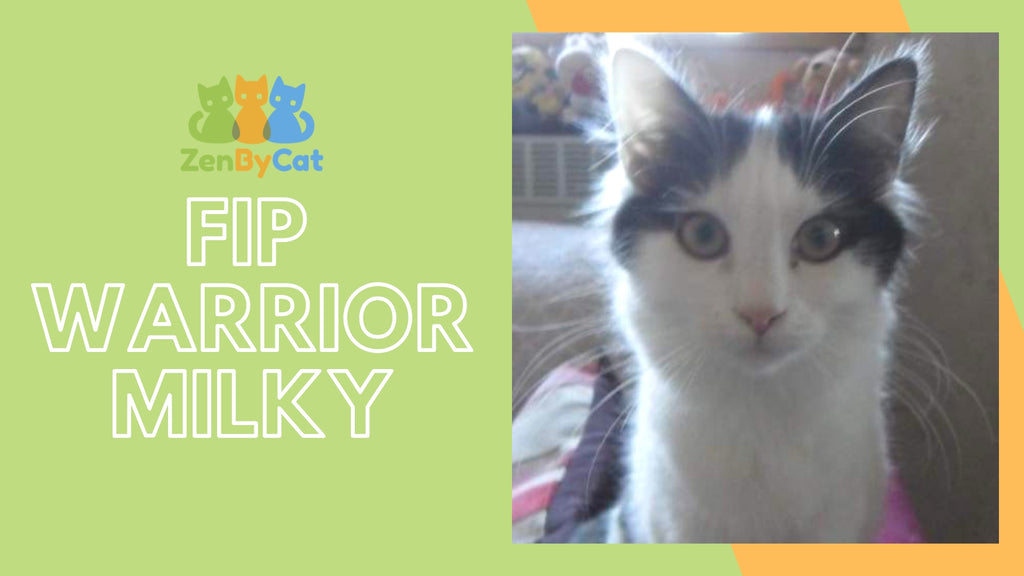 Stories | FIP Warrior—Milky