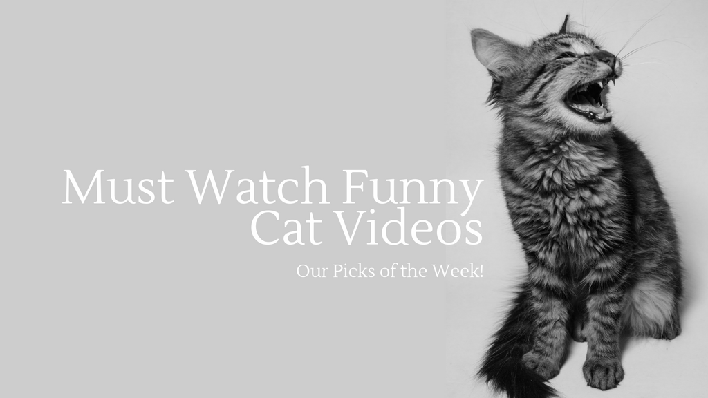 Funny Cat Videos | Look my Hollywood style Vogue