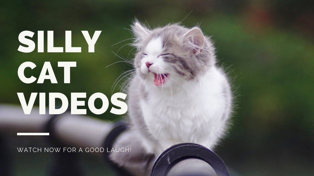 Funny Cat Videos | If you don't have a smile, I'll give you one of mine.😸