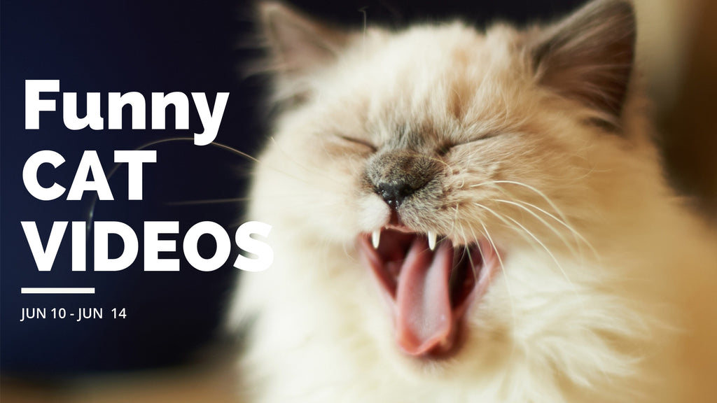 Funny Cat Videos | Meow hahaha...😹