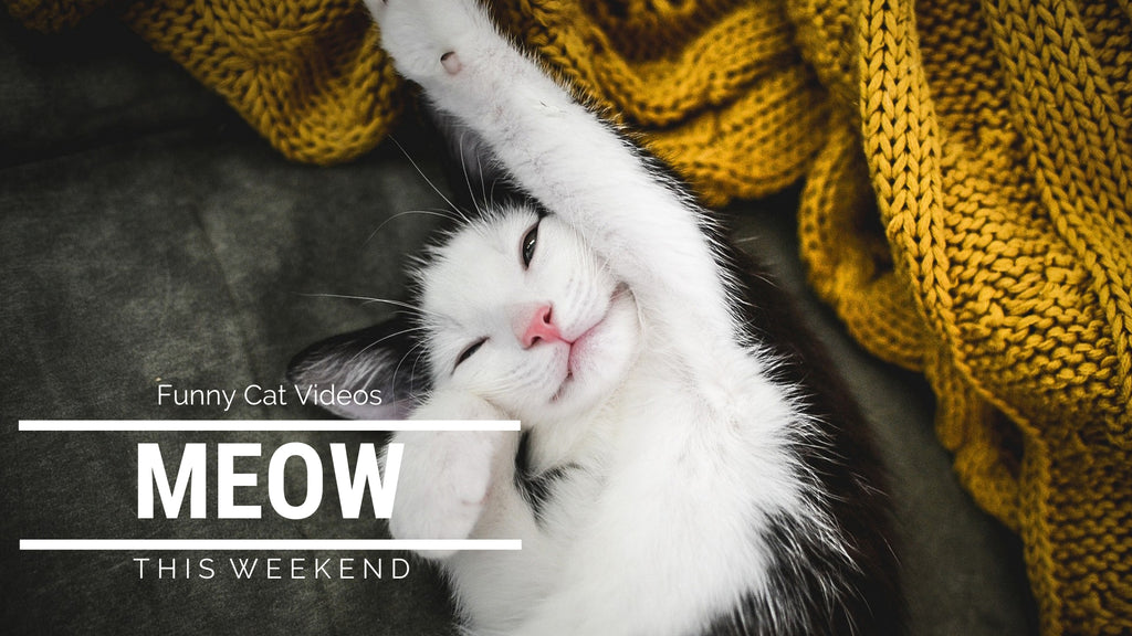 Cute Cat Videos | 😹The Wait Is Over! Cute Cat Video Time