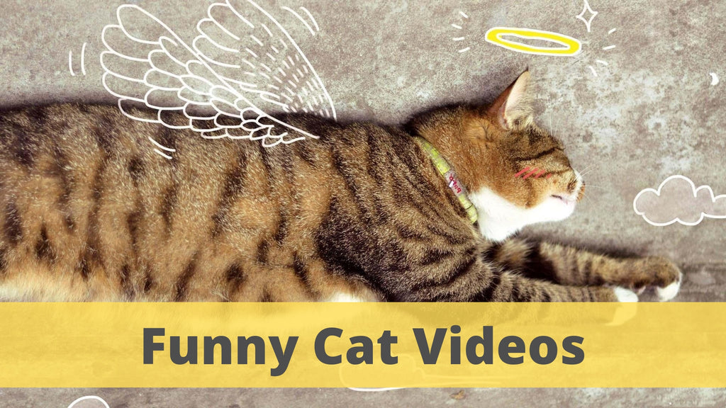 Funny Cat Videos | kittens are angels with whiskers✨