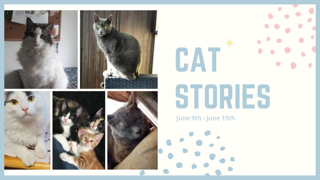 Cat Stories | Who's Scat, Jules, Winnie, Socks and Willow? Learn About Them This Week!