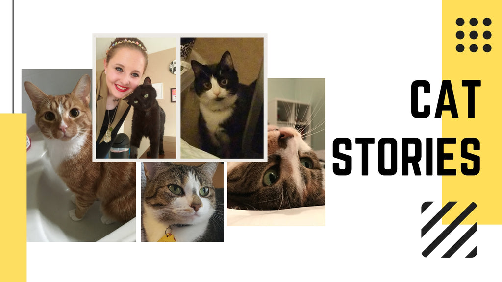 Cat Stories | Who's Pince, Anna, Chester, Selena, Daisy? Learn About Them This Week!