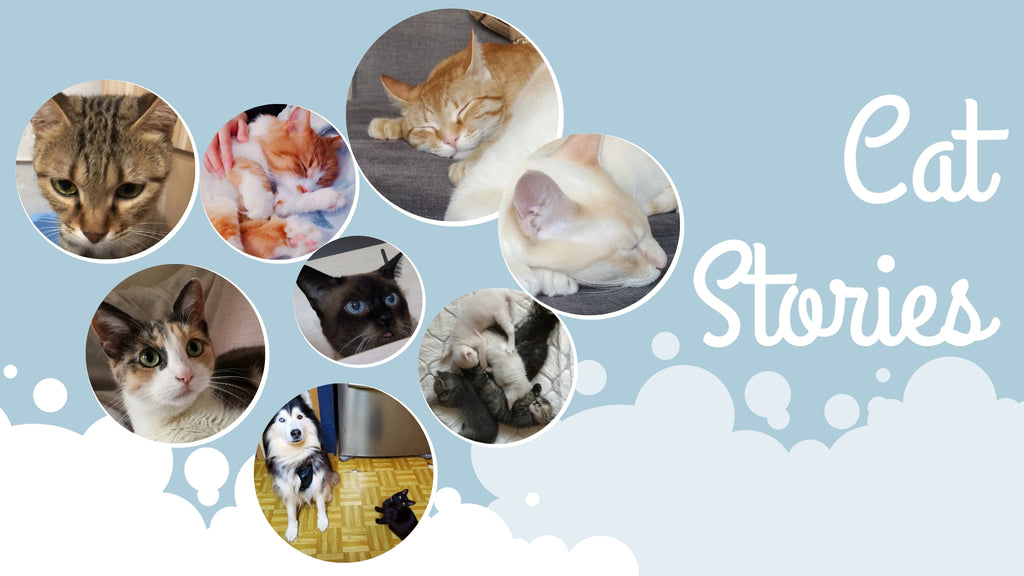 Cat Stories | Who's Raven, Cheddar, Mozzarella, Sima, and Baskerville? Read our stories now Meow!
