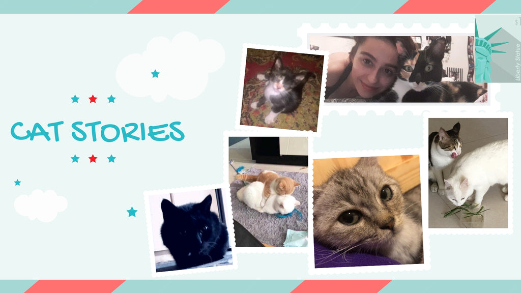 Cat Stories | Sweet Stories from Esperansa, Minky, Gabriell, Mittens and more!