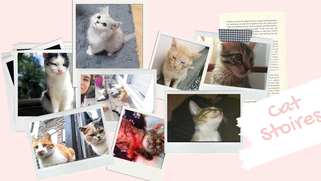 Cat Stories | Minnie Mouse, Princess, Mipu, and Vojko Want You To Read Their Stories!