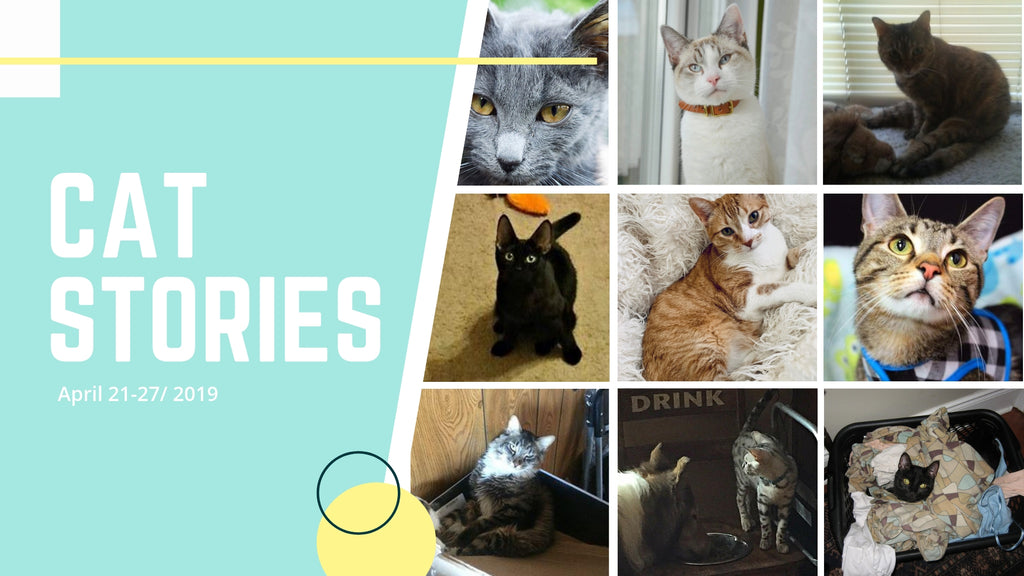 Cat Stories |  Featuring Marshamallow, Iggy, Frog, Needy, and More!