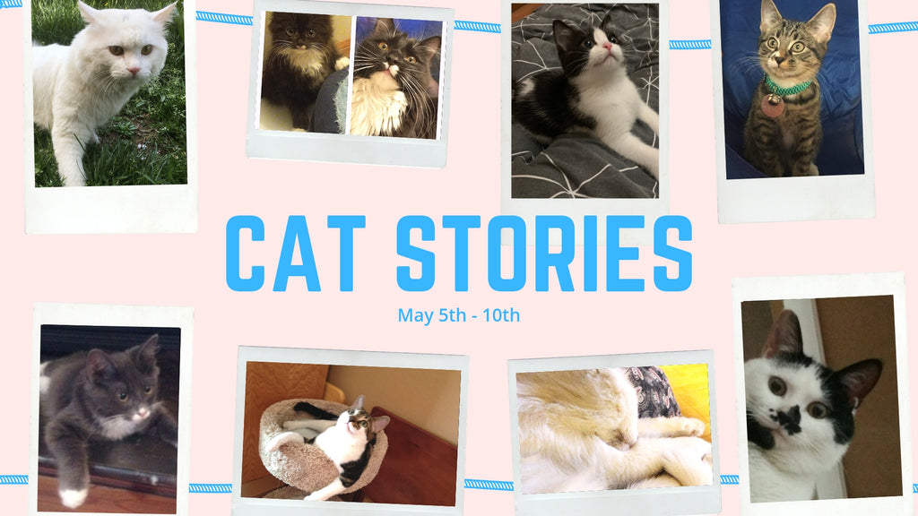 Cat Stories | Read About Aldonza, Ink, Snow, Nora, and More!