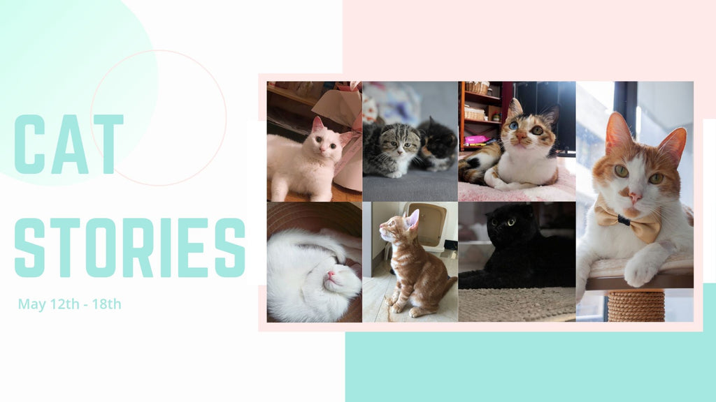 Cat Stories | Read About Otto von Katze, Rosco, Meta, Midnight, and More!