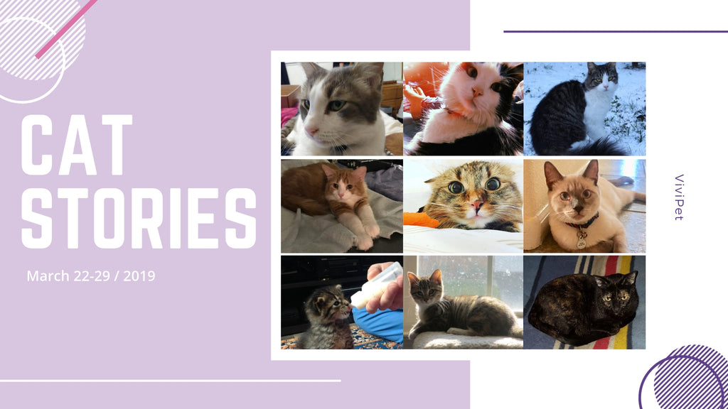 Cat Stories | Read These Touching Stories About Buddy, Betsy, BG, Sebas, and More!