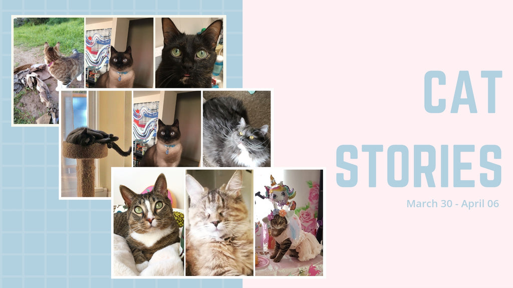 Cat Stories | Mimo, Kirry, Wally, and Princess Buttercup Want You To Read Their Stories!