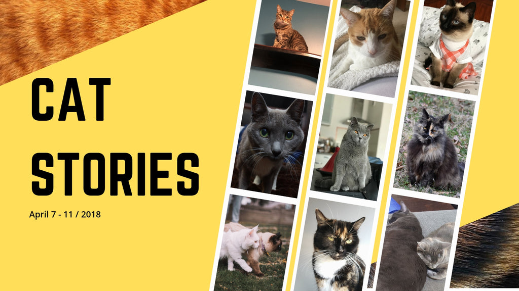 Cat Stories | Who is Admiral, Loke-wan Kenobi, Auri Rose, and Chloe? Learn About Them Here!