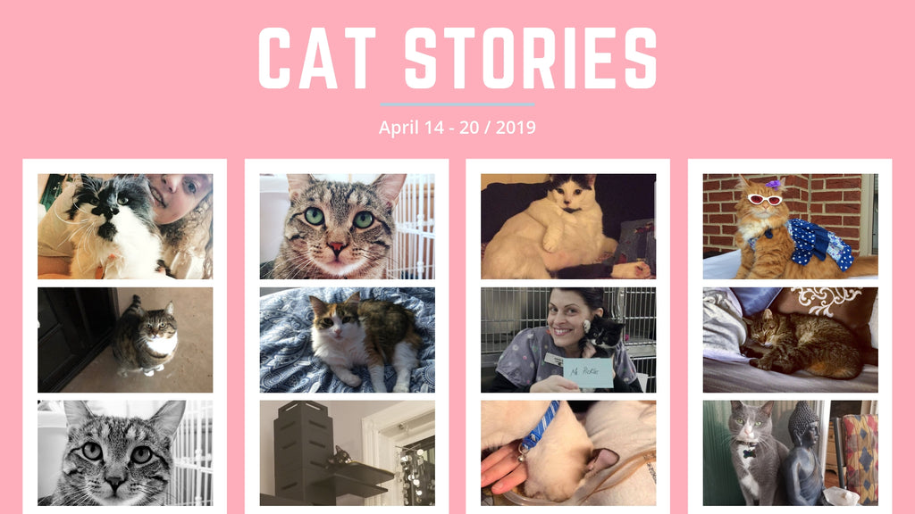 Cat Stories | Read These Amazing Cat Stories About Minos, Layla, Chocolate Pudding, and More!