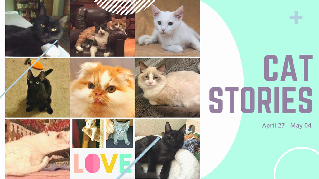 Cat Stories | Read about Carrickfergus, Snickers, Jenn Trof, and Tater Here!