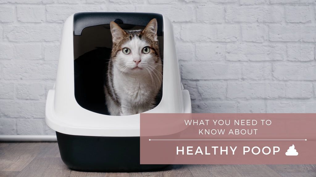 ViviPet | Healthy Poop: How to Tell If Your Cat's Number-2 Is Normal