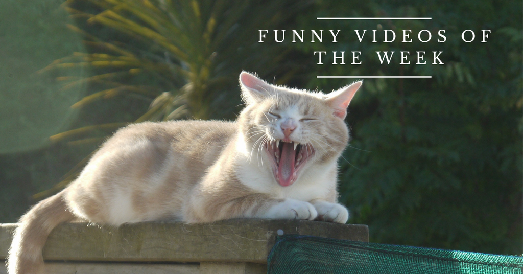 Funny Cat Videos | Woo Waa.. beautiful sunshine!