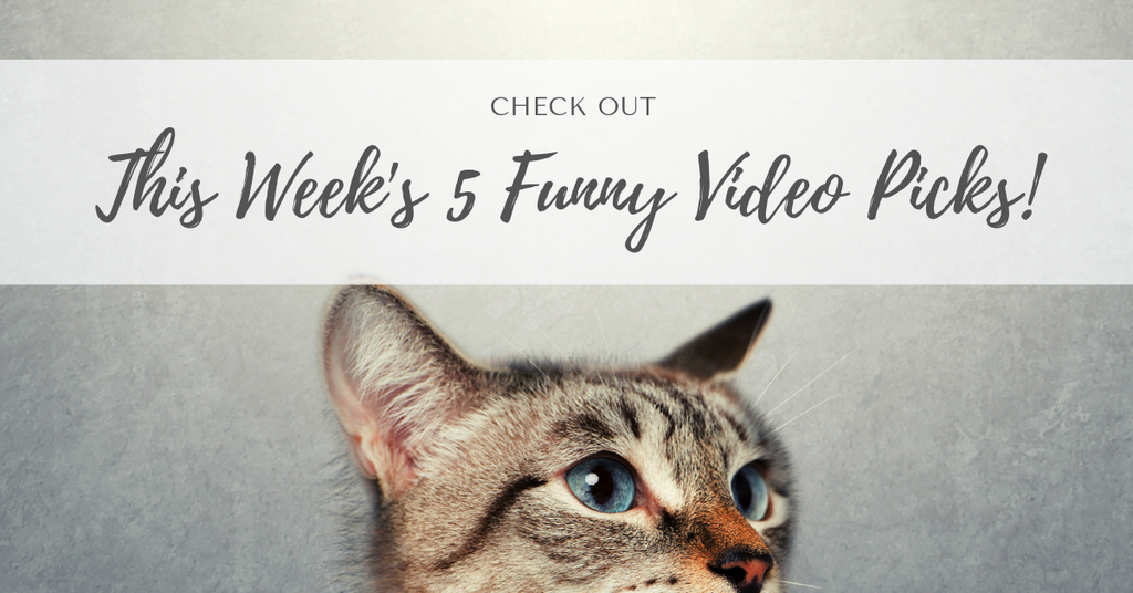 Funny Cat Videos | April 15th -  April 19th
