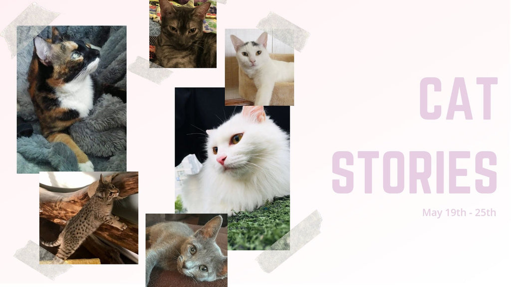 Cat Stories | Sweet Stories from Persistence, Two Stripes, Kitty Sunshine, and More!