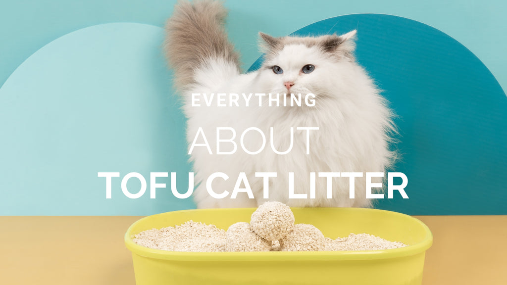 ViviPet | 3 Reasons to Switch to TOFU Cat Litter