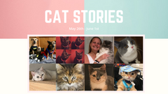 Cat Stories | May 26th - June 1st