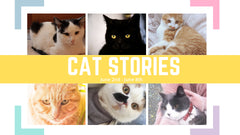 Cat Stories | Read about Riley, Lacey,Turbo, and Other Kitties' Stories Here