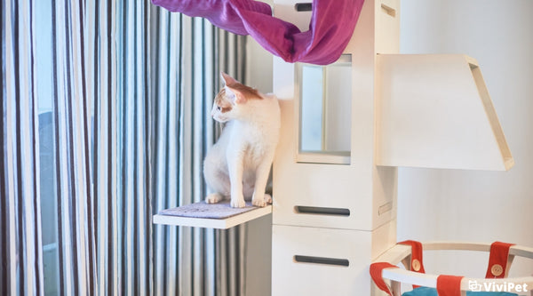 Top Tips for General Cat Care