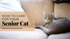 ViviPet | How to Care for Your Senior Cat