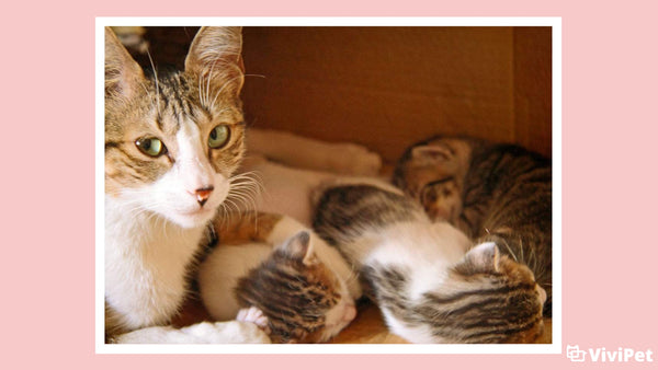 What You Need to Know About Post-Natal Care for Your Cat and Her Kittens