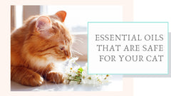 Essential oils good for cats