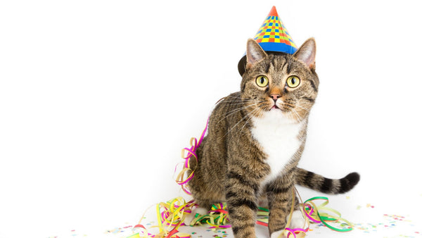 ViviPet | Summer Birthday Party Ideas for Your Pet