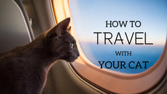How to travel with your cat
