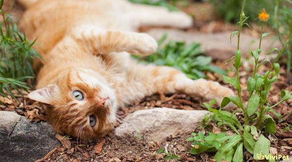 Enrich Your Summer with These Cat-tastic Activities