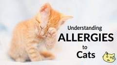 understaing the allergies to cats