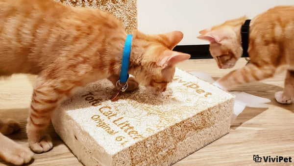The Importance of Eco-Friendly Cat Litter vivipet