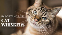 ViviPet | Importance of Cat Whiskers