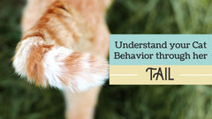 How to Understand Your Cat's Behavior through Her Tail🐈