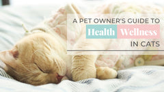 ViviPet | A Pet Owner's Guide to Health and Wellness at Home❤️