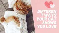 Different ways your cat shows your love