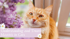 Understanding and Treating Mastitis in Cats